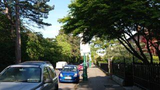木々と停車中の車